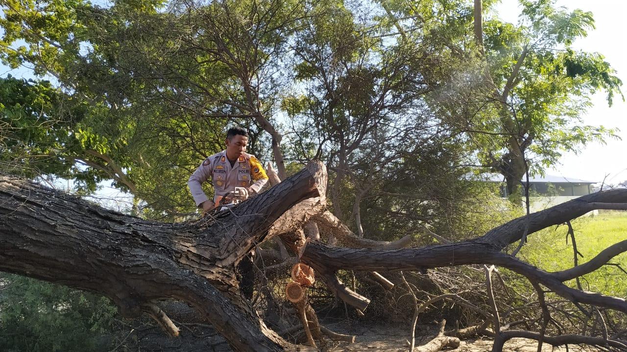Wow, Satuan Sabhara Polres Kupang Kota Sigap Bersihkan Pohon Tumbang.